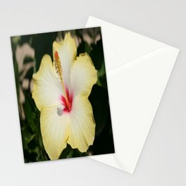 Yellow Hibiscus With Garden Background  Stationery Cards