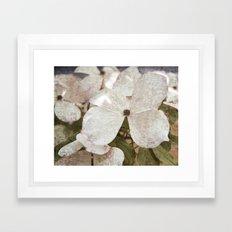 Vintage White Flowering Dogwood Framed Art Print