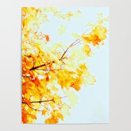 Yellow Maple leaves, Autumn Unfolds Poster