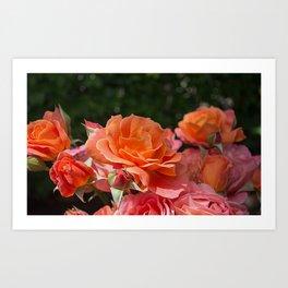 Roses Bokeh Background Art Print