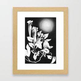 Moonlit Rendezvous Framed Art Print