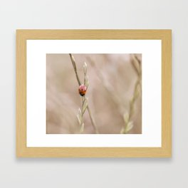 Ladybug in the grass Framed Art Print