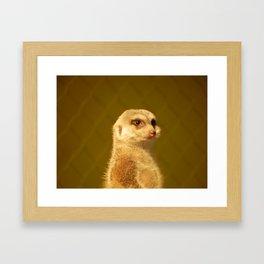 Meerkat Manor Framed Art Print