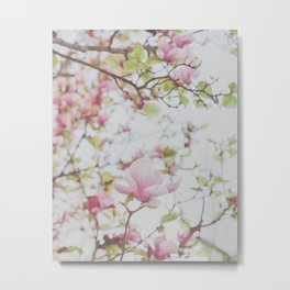 Magnolia Stories Metal Print