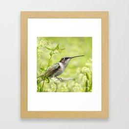 Hummingbird XIV Framed Art Print