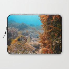 Painted Comber (Serranus scriba) Mediterranean Sea Underwater Laptop Sleeve