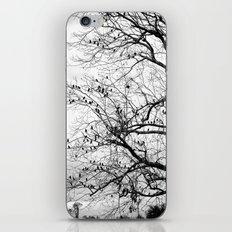 A Tree Full of Birds iPhone & iPod Skin