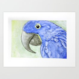 Ultramarine Blue Macaw Art Print