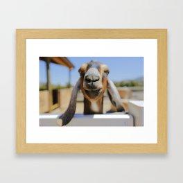 JarJar The Goat Framed Art Print