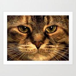 Cat Stare Art Print