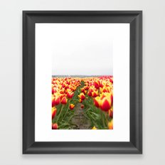 Tulip Row Framed Art Print