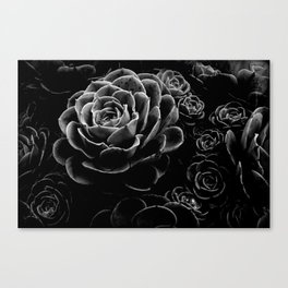 Succulents in the Shadows Canvas Print