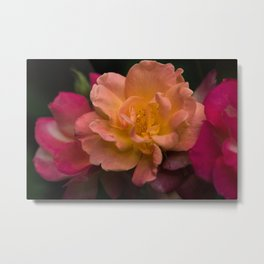 Three Roses The Color Of A Sunset Metal Print