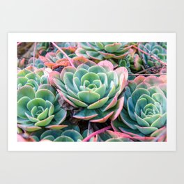Succulent Garden Vibrant Pastel Art Print