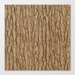 Bark of elm Canvas Print
