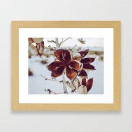 White Orange Flower Framed Art Print