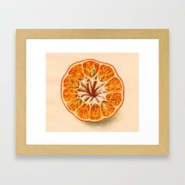 Tangerine (art from 1905 agricultural yearbook) Framed Art Print