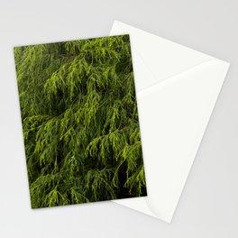 Evergreen Shrub Stationery Cards