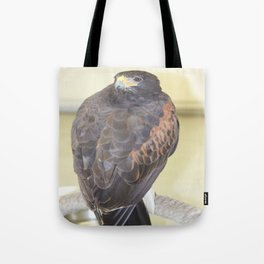Harris' Hawk Tote Bag