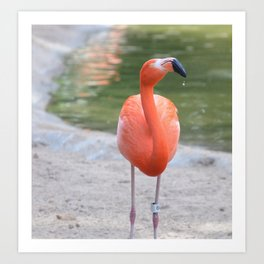 Flaming flamingo Art Print