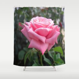 Pink Roses in Anzures 6 Shower Curtain