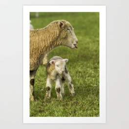 My Lamb's Better Than Yours Art Print