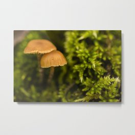 Little mushrooms #6 Metal Print