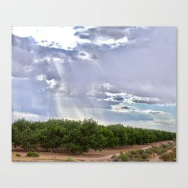 Storm Over a Tree Grove Canvas Print