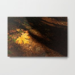Maple Leaf on the Forest Floor Metal Print