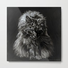 Who's for Dinner? Big Black & White Main Coon Cat Metal Print