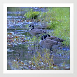 Geese in the Reeds Art Print