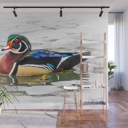 Wood Duck on the channel Wall Mural