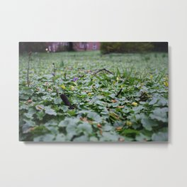 Meadow no.1 Metal Print