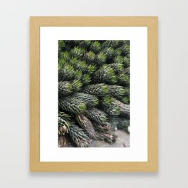 Haworthia coarctate - botanical photography Framed Art Print