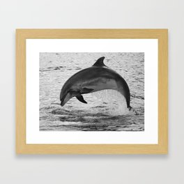 Jumping wild bottlenose dolphin black and white Framed Art Print