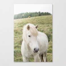 Icelandic Horse in Field Canvas Print