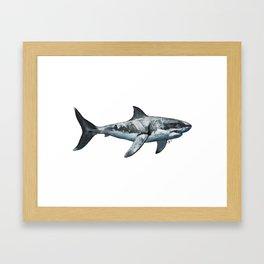 Great White (c) Framed Art Print