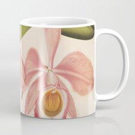 Flower cattleya eldorado splendens9 Coffee Mug