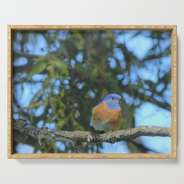 Western Bluebird Beauty by Reay of Light Photography Serving Tray