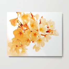 WARM BLOSSOMS Metal Print