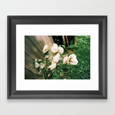 Like Petals Framed Art Print
