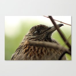 Eye of the Road Runner Canvas Print