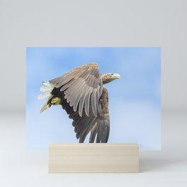 White Tailed Sea Eagle Mini Art Print