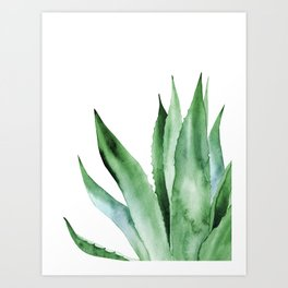 Agave Plant. Art Print