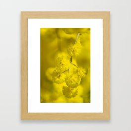 Acacia Macro Framed Art Print