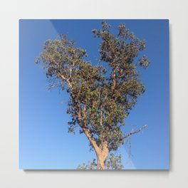 Clear sky heart tree Metal Print
