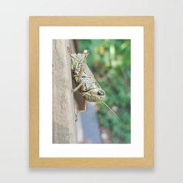 steady Framed Art Print