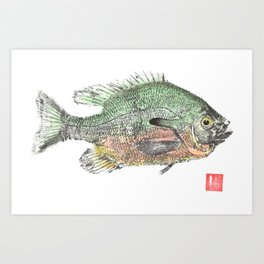 Red Breasted Sunfish 2 Art Print