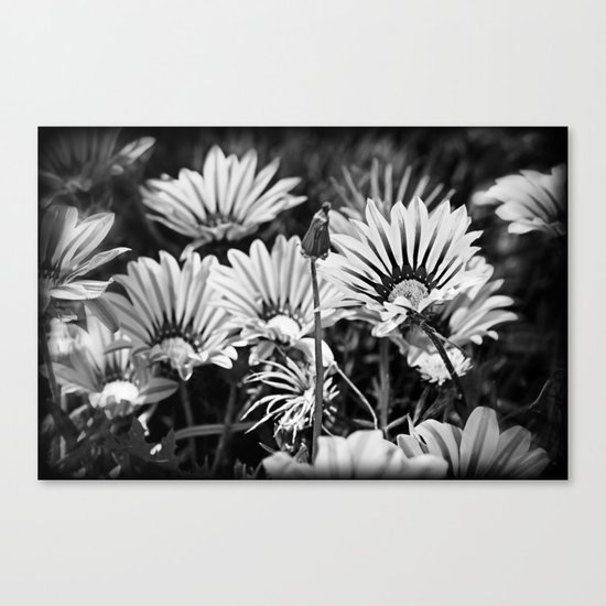 Desert Daisies (bnw) - Daisy Project in memory of Mackenzie Canvas Print