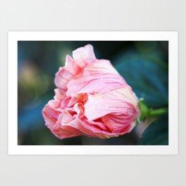 Jane Cowl Tropical Hibiscus Petals Unfurling Art Print